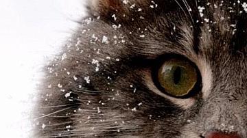 10 важни съвета за живота, които може да научите от котката ви