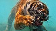 10 изключителни подводни снимки
