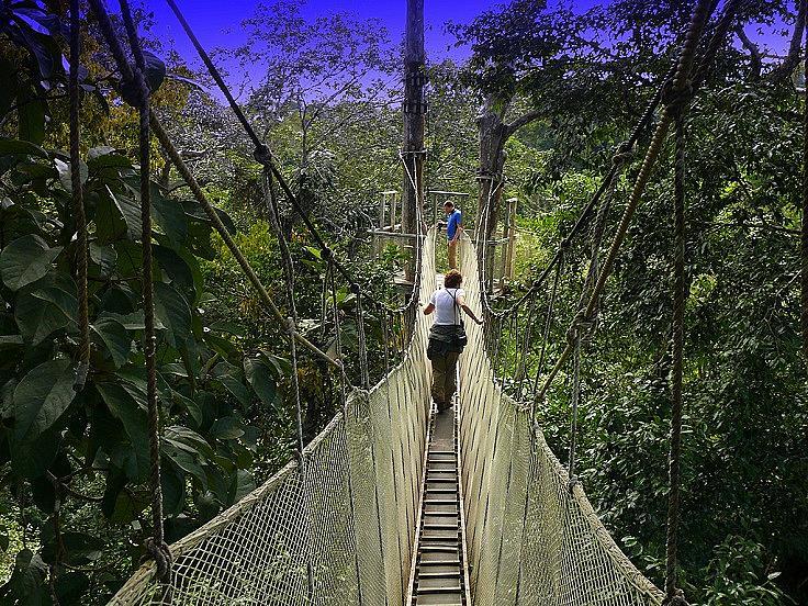 ТРОПИЧЕСКИТЕ ГОРИ НА АМАЗОНИЯ /  Тропическите гори са само един от видовете тук. 7 милиона квадратни километра, от които само 60% са на бразилска територия, а останалите са в съседни държави. В тропическите гори живеят хиляди видове риби и над 2 милиона различни насекоми. Амазония е дом на много смъртоносни животни. Въпреки, че е истинско природно чудо, Амазония не е туристическа дестинация поради няколко причини. Освен смъртоносните растения и животни, районът е населен от стотици наркобанди, които спазват истинския закон на джунглата.