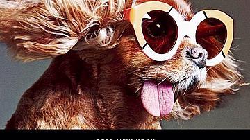Кучешки живот в Instagram