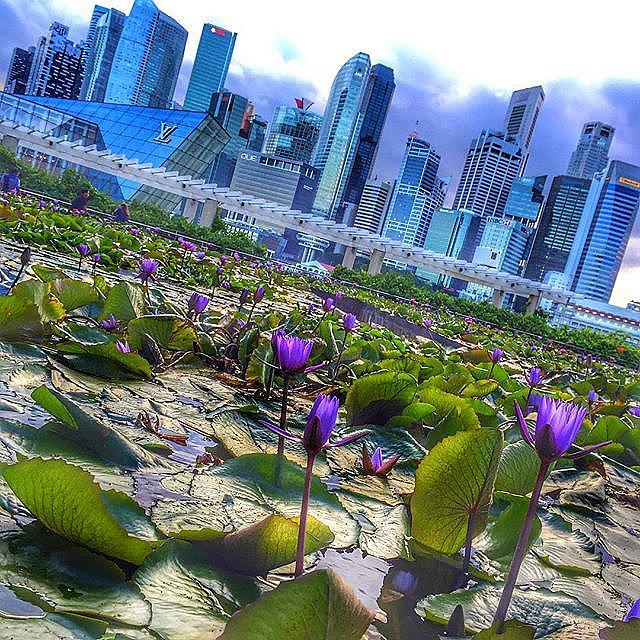 Небостъргачите в Сингапур