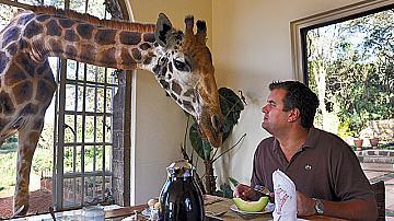 Да обядвате с жирафите