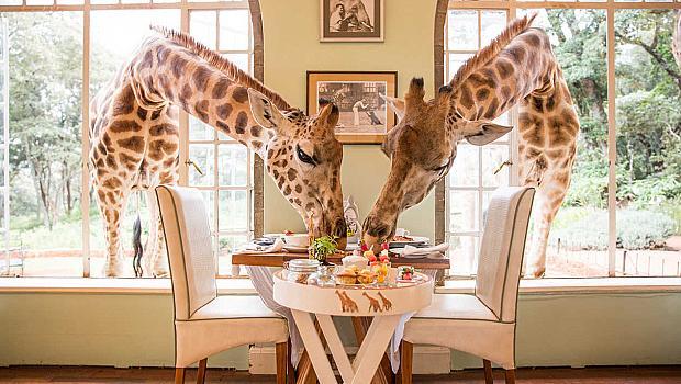 Да закусваш с жирафи