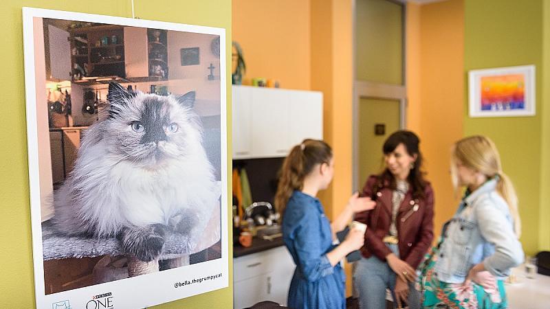 За котките с любов или колко голяма звезда може да бъде една... котка