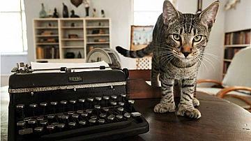 Котките на Хемингуей са забележителност