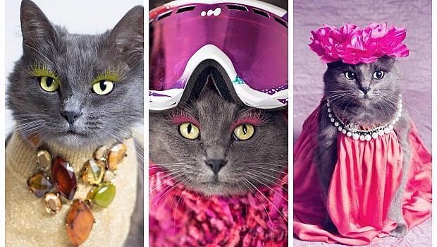 Глем котка набира популярност в Instragram