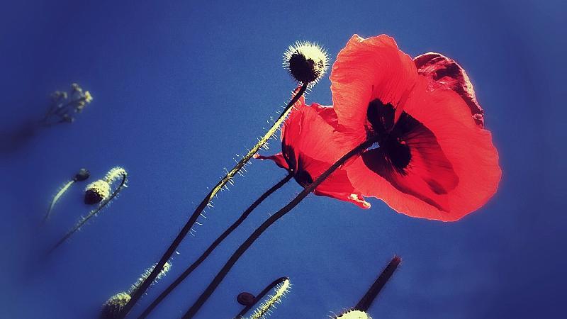 """""""Една роза може да е моята градина. Един приятел – моят свят"""""""