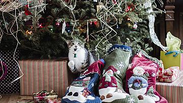 13 неща за Коледа, които вероятно ще ви изненадат