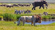 Gucci се присъедини в опазването на застрашени от изчезване животни