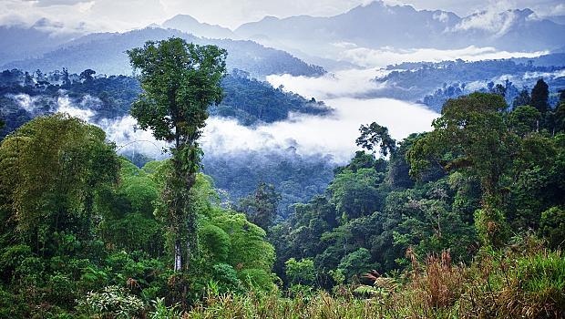 5 начина да помогнете на Амазонските гори