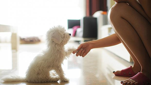 Любовта към кучетата е заложена в ДНК-то ни