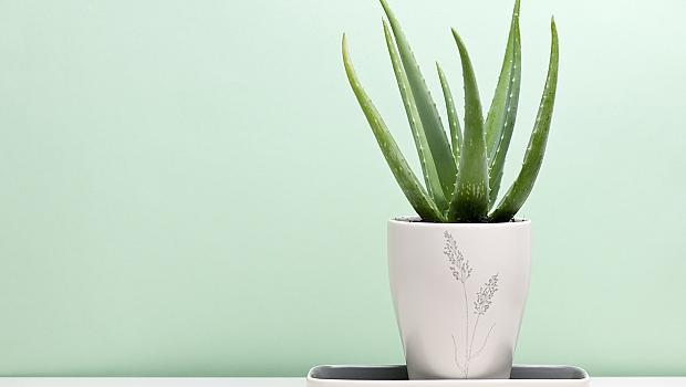 4 растения за офиса