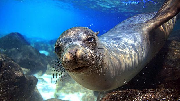 Дните на тези 3 места по света са преброени: Галапагоски острови