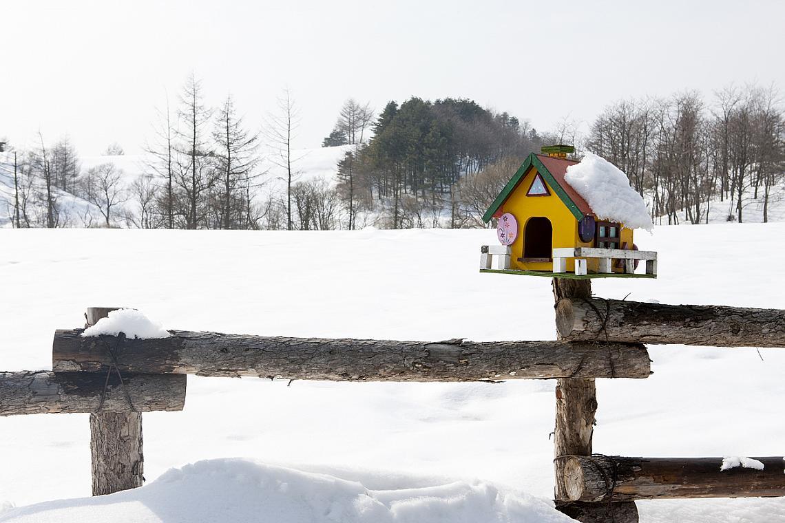 В необятните снежни полета на Пьонгчан има много живот.