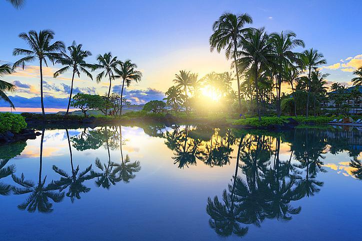 Залез зад палмовите дръвчета