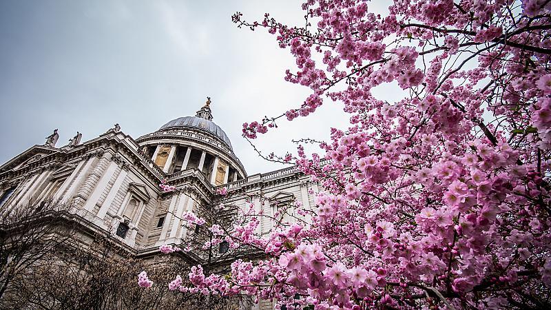 Магията на пролетен Лондон, когато дърветата цъфтят