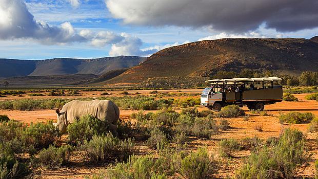 Сафари в Кейптаун, ЮАР