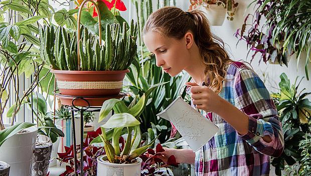 5 домашни растения, които няма да успеете да убиете