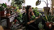 Стайните растения: красиви и полезни
