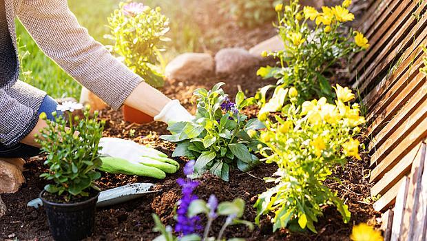 Правилата на викторианците за щастлив живот: №3 Грижете се за някакво растение