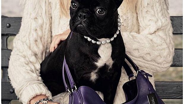 Кучето на Лейди Гага е рекламно лице