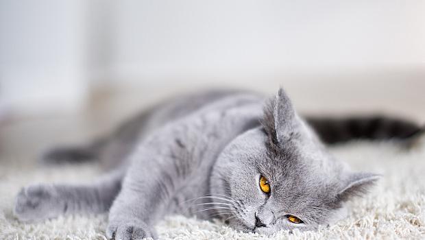 10 интересни факта за котките