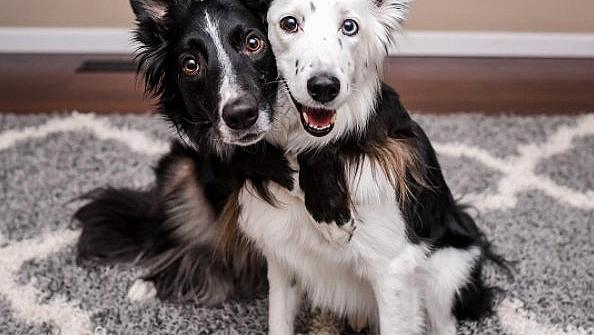 INSTAFAMOUS: Енви и Зейн - гушкащите се кучета